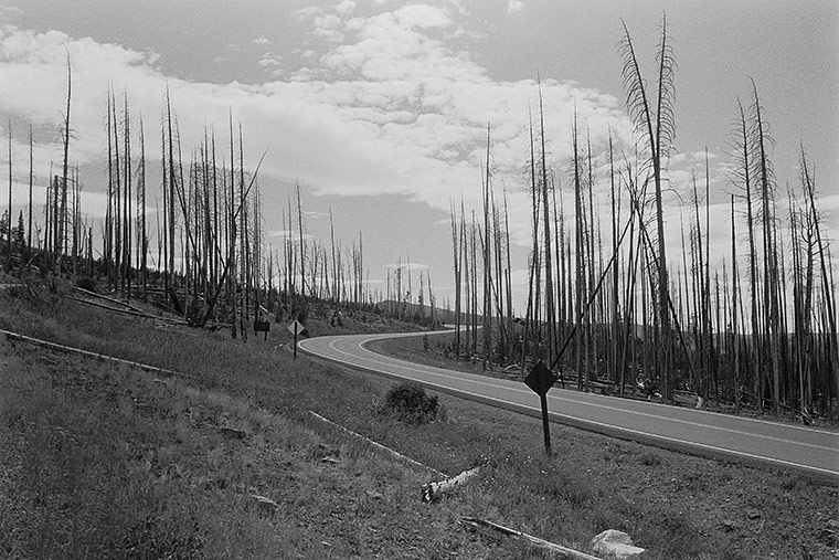 Yellowstone Park, Wyoming, 2008