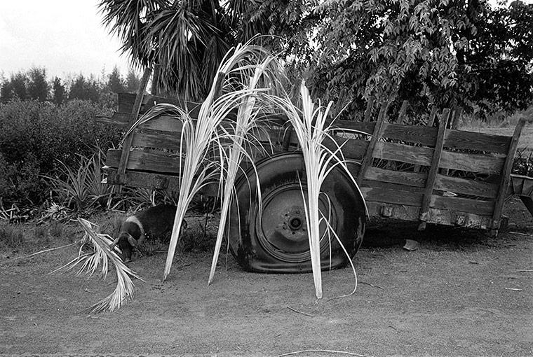 Cabañas, Cuba, 2001